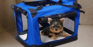 transportin perro viajar